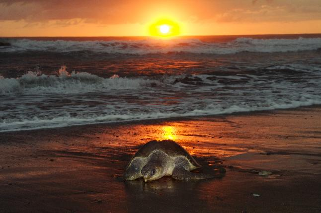 Las Baulas turtle sunset